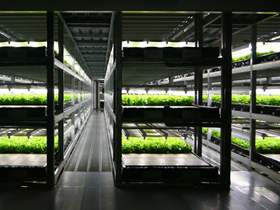 Vertical Farm Urban Gardening