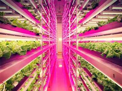 Vertical Farm Urban City